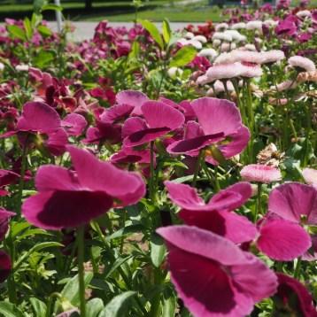 Juni-Blütenpracht im egapark