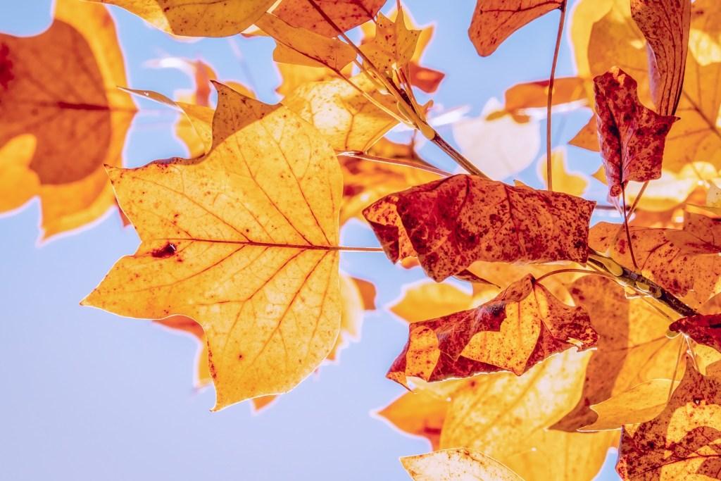 autumn-3763897_1920