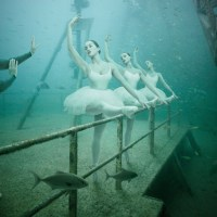 Andreas Franke: Underwater Photography Exhibition