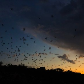 Watching 10-12 Million Bats Take Flight in Texas