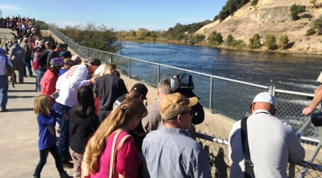 Nimbus Hatchery Fish Ladder to Open Nov. 2, 2016