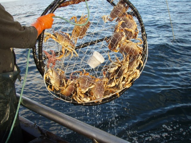 More of Commercial Dungeness Crab Fishery to Open, Some Areas Will Remain Closed