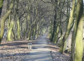 samotność z drzewami