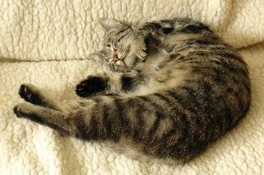 śpiąca kicia