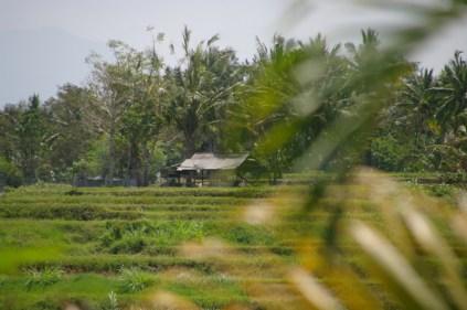 imgp0116 - Indonezja, cz. II Bali, Ubud