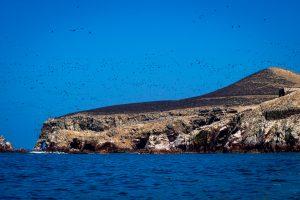 20181030  A300497 300x200 - Islas Ballestas, czyli Galapagos dla ubogich
