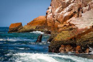 20181030  A300578 300x200 - Islas Ballestas, czyli Galapagos dla ubogich