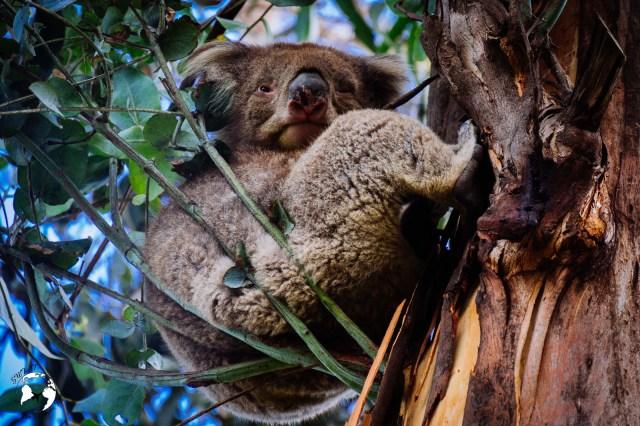 WhatsApp Image 2019 06 13 at 23.06.28 1 - Jakie zwierzęta możesz spotkać w Australii?