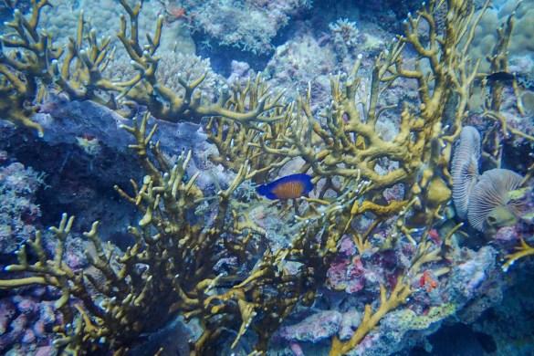 Wielka Rafa Koralowa2 - Cairns - co zwiedzić i czym się zachwycić?