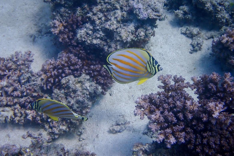 Wielka Rafa Koralowa5 - Cairns - co zwiedzić i czym się zachwycić?
