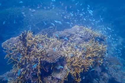 Wielka Rafa Koralowa6 - Cairns - co zwiedzić i czym się zachwycić?