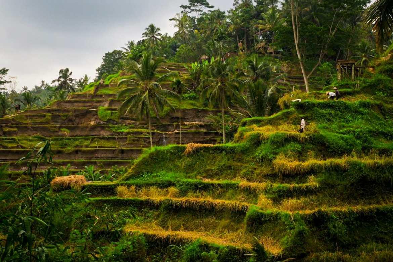 WhatsApp Image 2019 07 05 at 23.16.31 - Bali - gdzie pojechać, żeby się nie rozczarować?