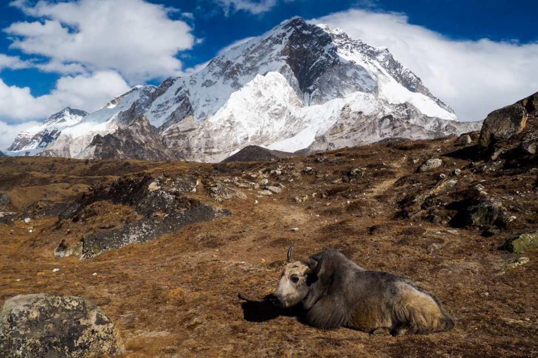 WhatsApp Image 2019 11 26 at 21.29.53 1 - Himalaje na własną rękę - trekking na EBC