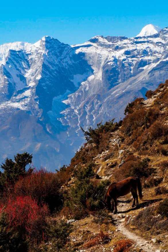 WhatsApp Image 2019 11 26 at 21.30.41 - Himalaje na własną rękę - trekking na EBC