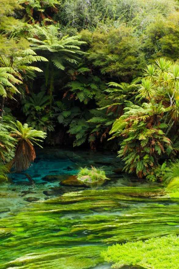 Blue Springs NZ - 3 tygodnie w Nowej Zelandii - plan trasy