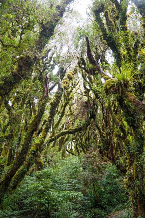 Kamahi walk - 3 tygodnie w Nowej Zelandii - plan trasy