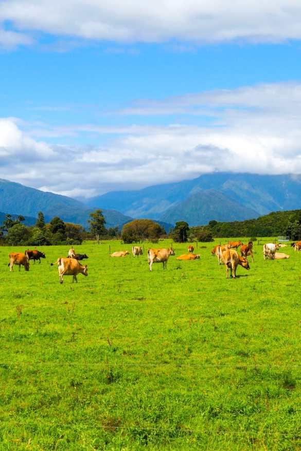 Nowa Zelandia - 3 tygodnie w Nowej Zelandii - plan trasy