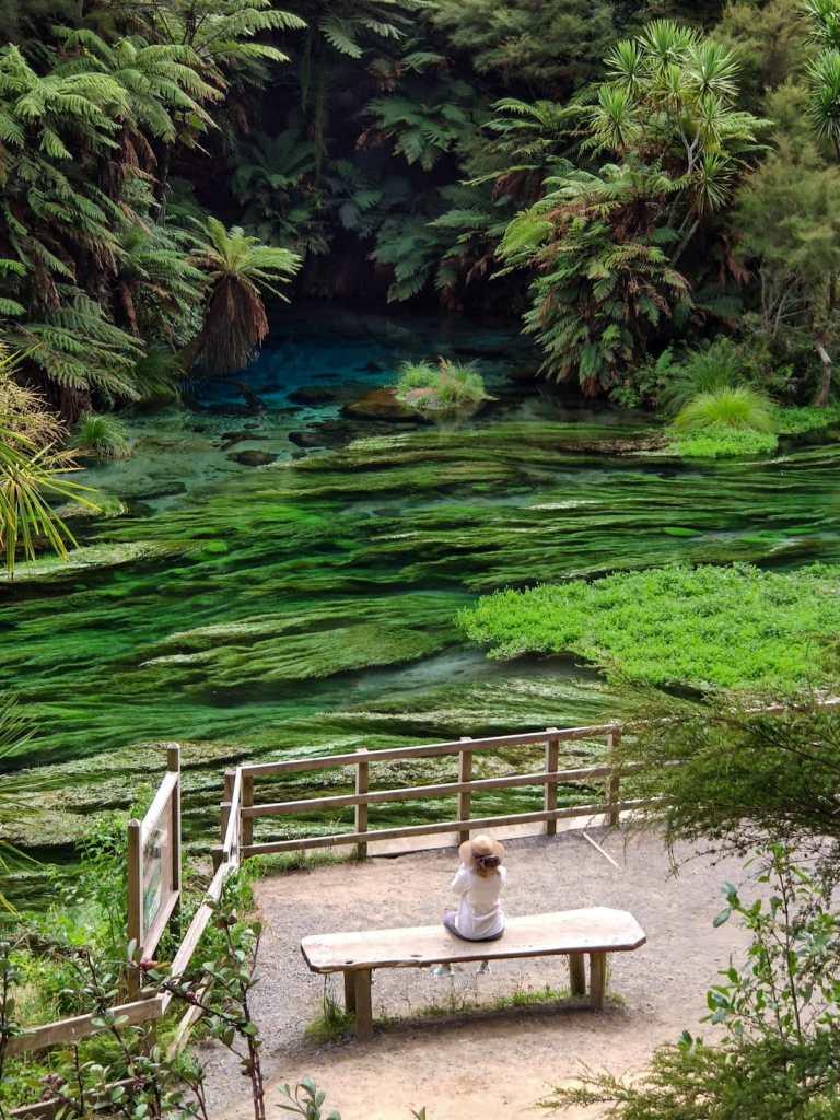 Blue Springs 768x1024 - Nowa Zelandia - koszty podróży