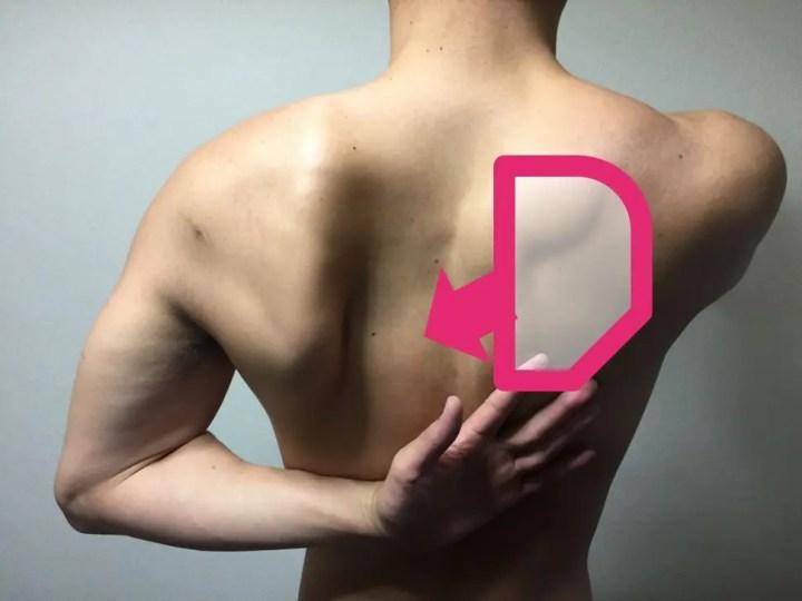 肩甲骨を縮める動き解説付き