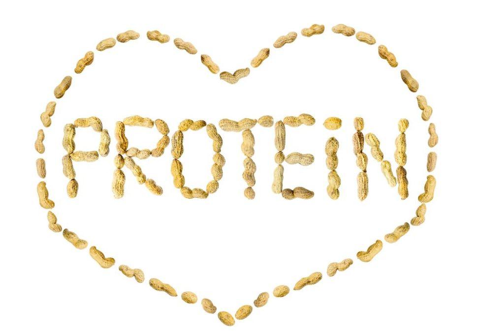 Love Protein