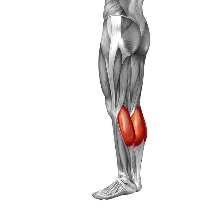 水泳で鍛えられる下腿三頭筋