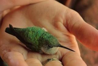 a bird in hand,