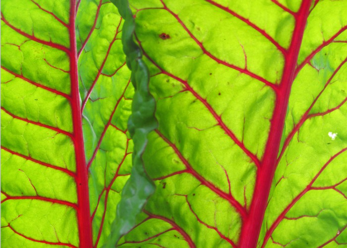 collard-greens-salad-vegetables