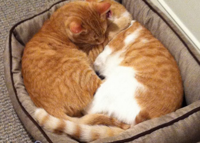 Baker-Cats-2016
