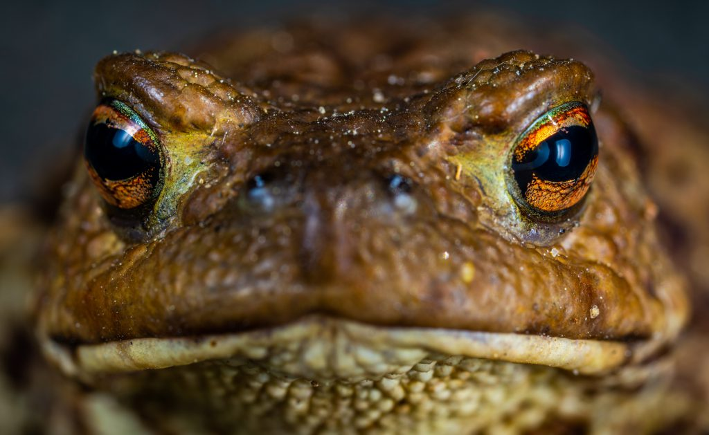 frog-face-close