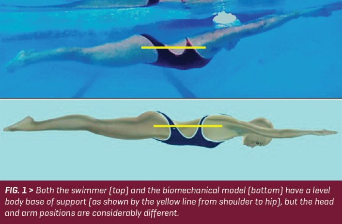 SW August 2020 - Swimming Technique Concepts - Development of an Optimal Model For Technique - Part VIII-- Body Base of Support For Breaststroke By Rod Havriluk - FIG 1