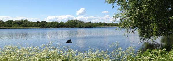 Gentofte sø, juni 2013