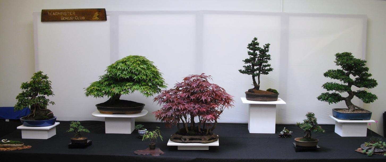 Warminster bonsai society