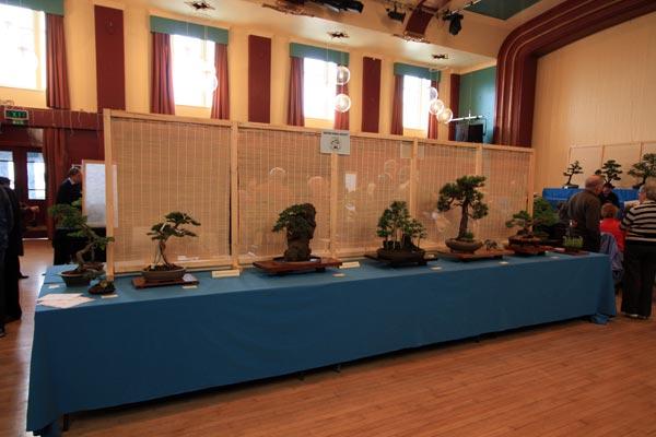 Exeter Bonsai Society Exmouth Show 2011