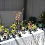 Reid bonsai