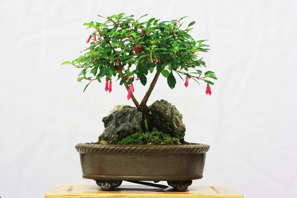 Joint 1st place - Fuchsia