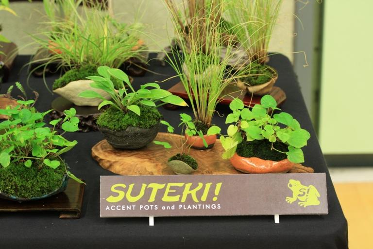 Suteki @ Bonsai World 2011