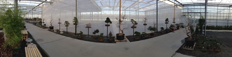 Panoramic of trees_1