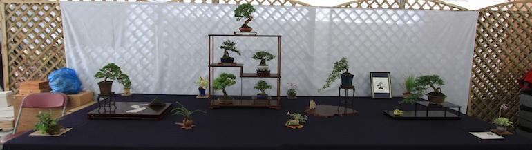 Eastleigh Bonsai display