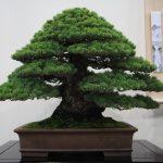 Best Evergreen