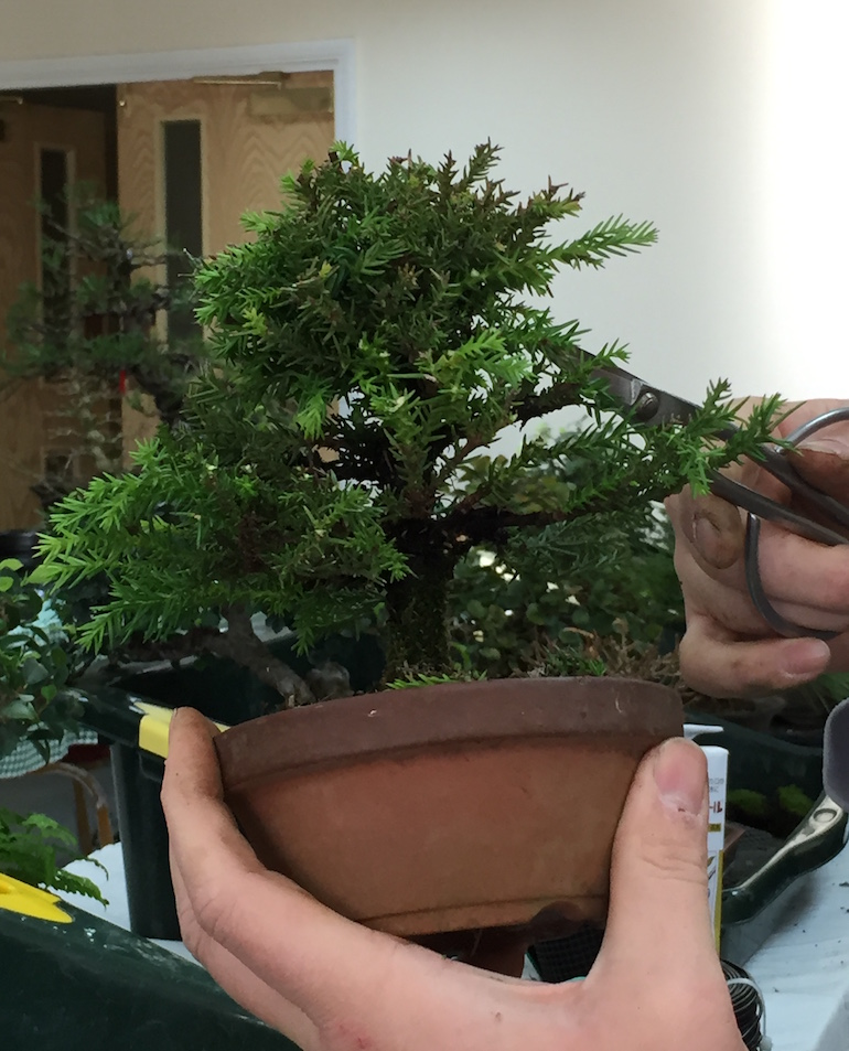 Removal of unwanted branches and growth