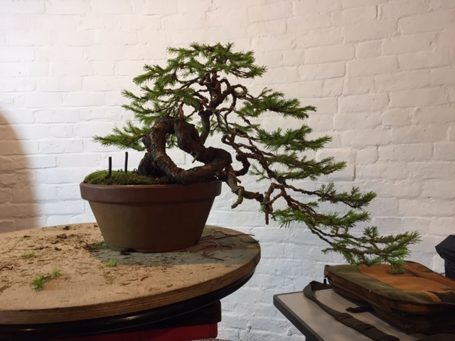 Steve Tolley bonsai demonstration after