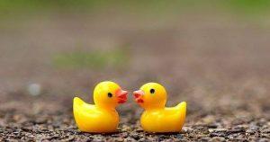 Swindon's Famous Duck Race