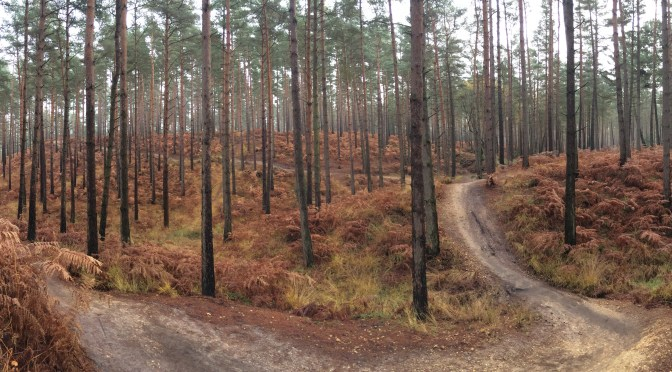 Places to Ride: Swinley Forest's Best Bits | Swindon MTB