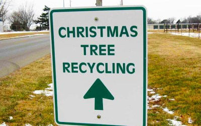Christmas Tree Recycling In Swinford 2020