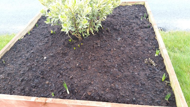 Kiltimagh road planters 20160203_151246