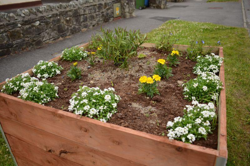 Kiltimagh road planters MAY_5841
