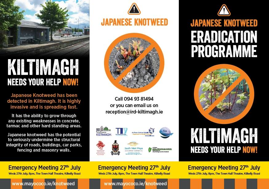 Japanese Knotweed Mayo Meetings