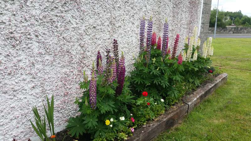 Swinford ESB wall flowerbed-20160611_121904