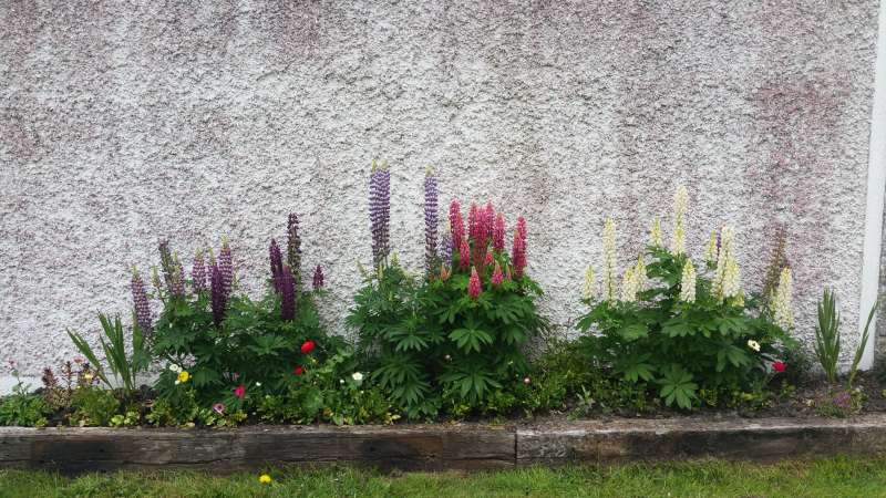 Swinford ESB wall flowerbed-20160611_122043