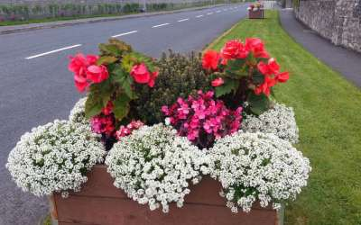 Our Planters Are Blooming In 2016